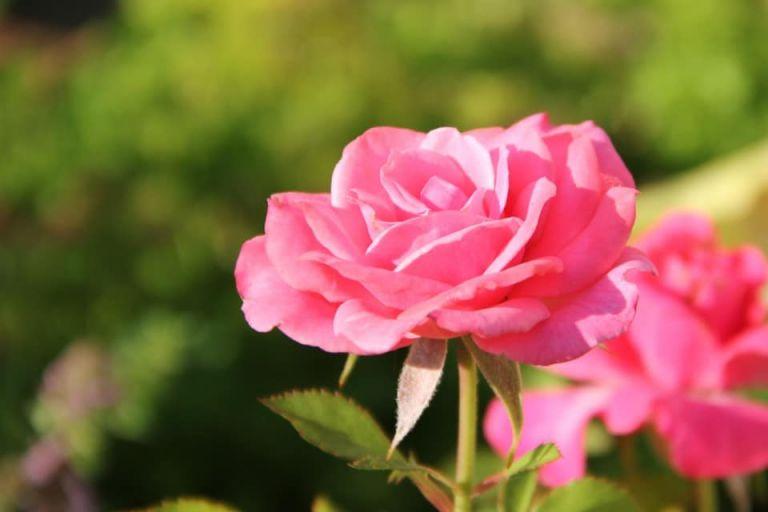 Recadrage en mettant la fleur au tiers de l'image